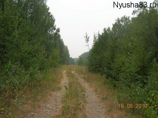 DSCN6319
