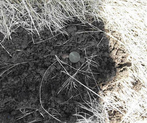 Как найти монеты в земле какие старые монеты сейчас ценятся
