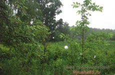 Дождик перед копом — к серебру?