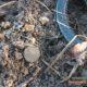 Поиск с металлоискателем на старом урочище — монеты есть!!! Отчет о выезде (26 фото)