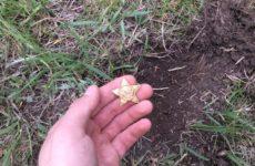 Необычная находка кладоискателя — интересная «золотая монета»? Отчет от камрада с Минелабом 505